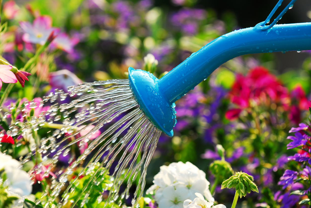 You Rarely Have To Water To Keep Alive Will Help Your Home Look  Stunning Even In These Harsh Dry Times Hear Are Some Plants That Are Drought  Resistant
